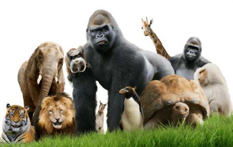 The Importance of Zoos