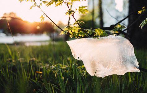 Should Lynbrook Tax Plastic Bags?