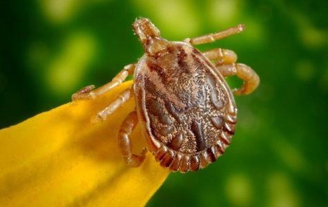 Bieber Battles Lyme Disease