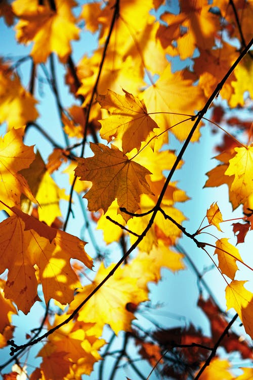 Blanket me with leaves… As sleep sinks down from the sky