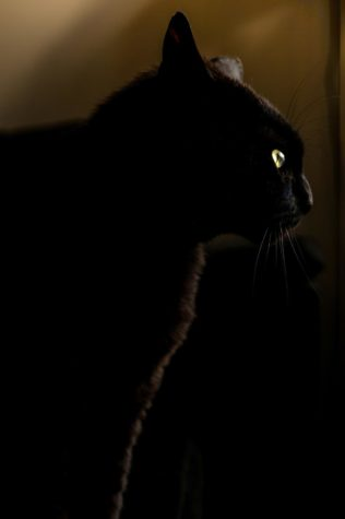 As a girl approaches what she believes to be her seemingly innocuous cat at night, she soon discovers it is not what she thought it was.