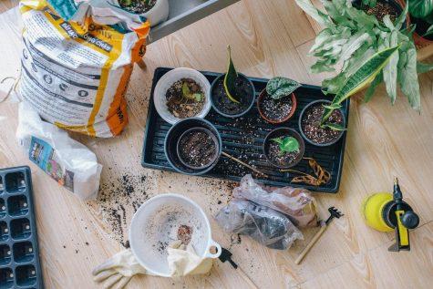 Dig into Gardening!